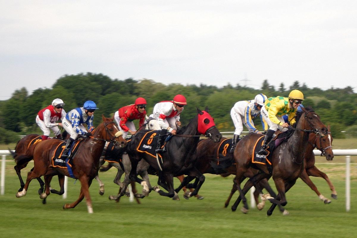 horse-racing-2714850 1280