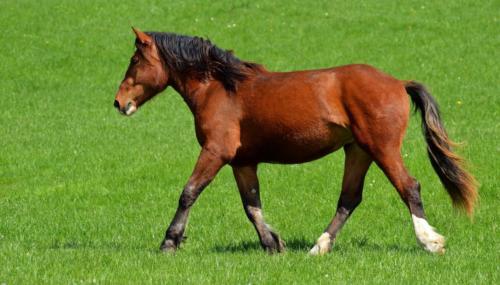 horse-3067834 1920