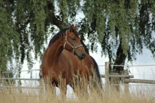 horse-3317912 1920