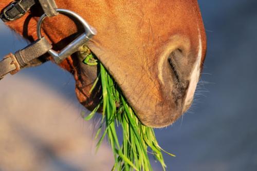 horse-snout-3316368 1920
